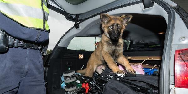 'daika' Adli Köpek Başçavus Olacak