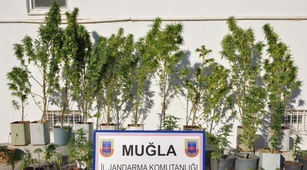 Datça'da Jandarmadan Uyuşturucu Operasyonu