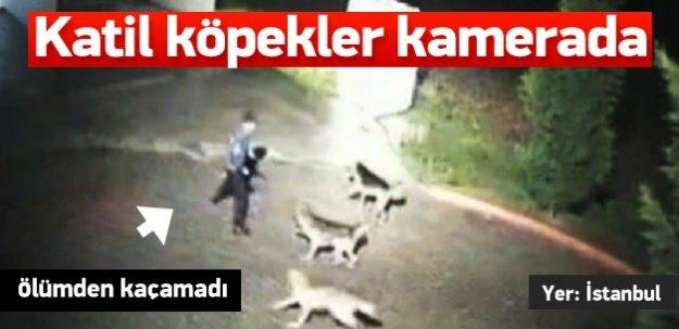 Dehşet! Katil köpekler saniye saniye kamerada!