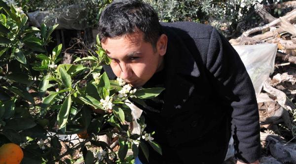 Demre'de Ağaçlar Çiçek Açti, Meyve Verdi