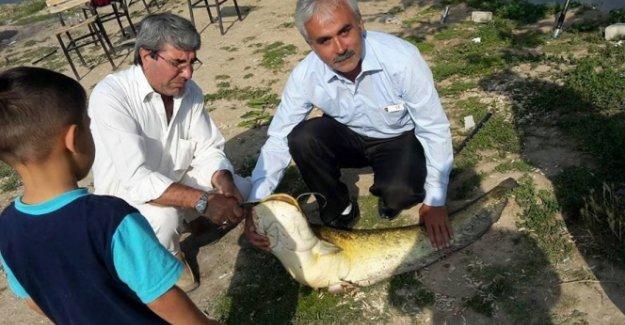 Dev sazan balığı görenleri şaşırttı