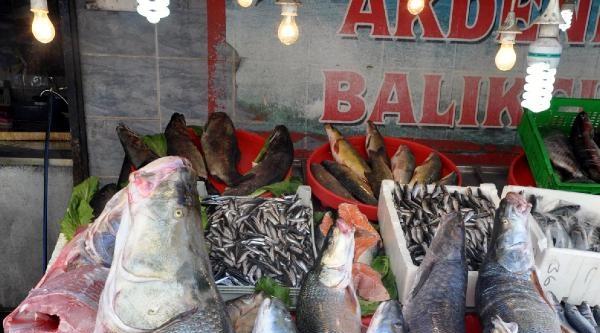 Dev Turnalar Balıkçıların Yüzünü Güldürdü