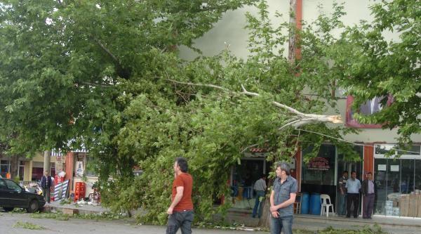 Devrilen Ağacın Kopardığı Elektrik Telleri Korkuttu
