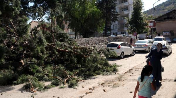 Devrilen Çam Ağacı 3 Otomobile Zarar Verdi