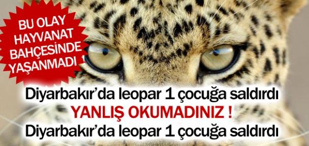 Diyarbakır'da leopar bir çocuğa saldırdı! Bu olay hayvanat bahçesinde yaşanmadı!