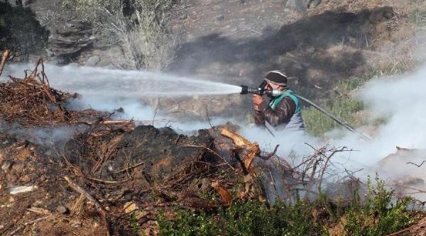 Dondurucu Soğukta 50 Hektar Kizilçam Ormani Yandi