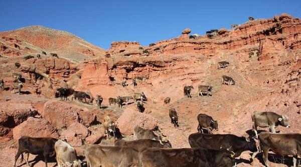 Dünya Mirasina Aday Narman'daki 'peri Bacalari' Otlak Alani Oldu