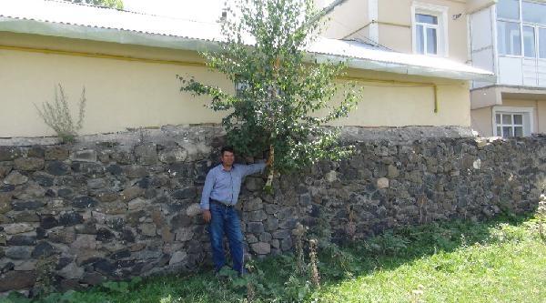 Duvardan Ağaç Çikti