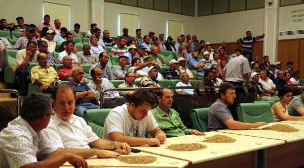 Edirne'de Buğday Alım Fiyatı Düştü, Çiftçi İsyan Etti