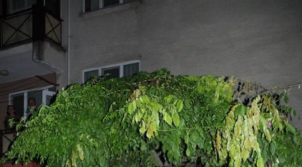 Edirne'de Fırtına Ağaçları Devirdi (3)