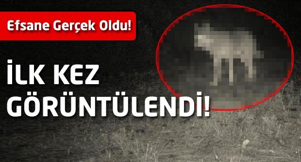Efsane gerçek oldu! Türkiye'de İlk Kez Görüntülendi!