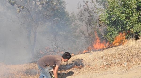 Ekinözü'nde Ormanlık Alanda Yangın