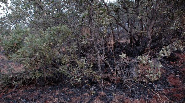 Elazığ'da İki Ayrı Orman Yangını