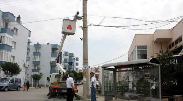 Elektrik Teline Çarpan Karga Yangına Neden Oldu