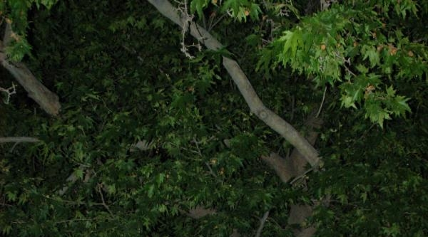Ellerindeki Fenerlerle Ağaçta Hırsız Aradılar