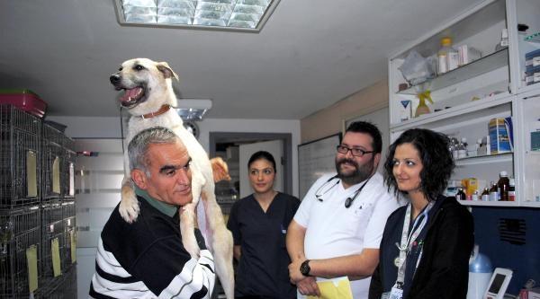 Emekli Hayvan Sever Sokak Köpeğini Ameliyat Ettirdi