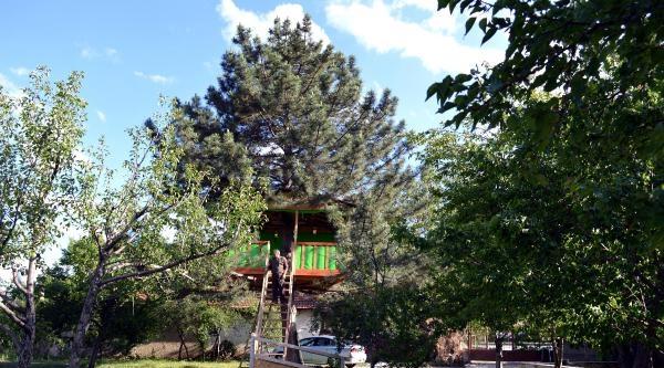 Emekli İşçinin Çam Ağacında Çardak Keyfi