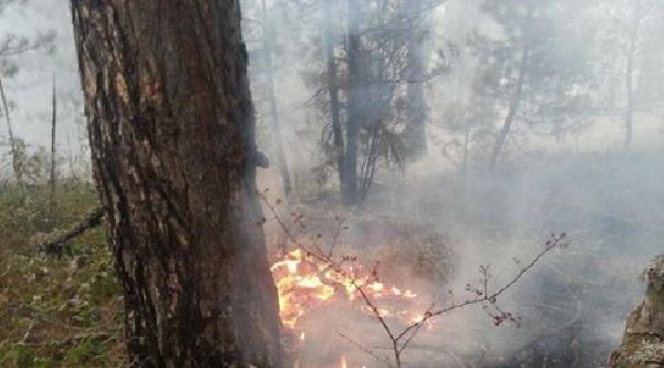 Emet'te 40 Hektar Alan Yandı