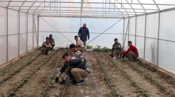 Engelli Öğrenciler Serada Sebze Yetiştirecek