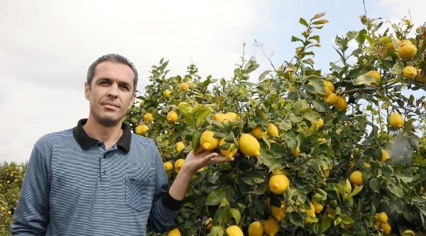 Erdemli Limonu Ve Mandarinine Tescil