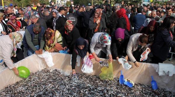 Ereğli'de Hamsi Izdihami