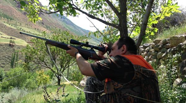 Erzurum'da Domuzlara Sürek Avı
