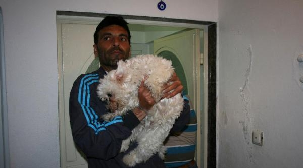 Evde Yalnız Bırakılan Köpek Kurtarıldı