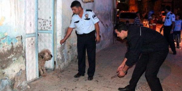 Eve Giren Köpekten Korkan Aile Polisten Yardim Istedi