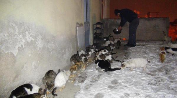 Evinin Önünde 40 Kediyi Besliyor