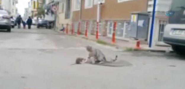 Fare kediyi maskaraya çevirdi!