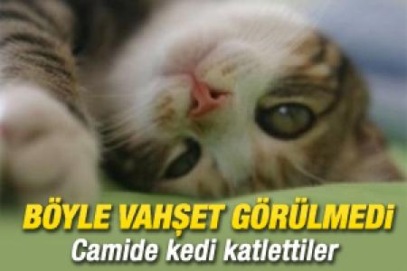 Fatih'te bir camide kedi katliamı!