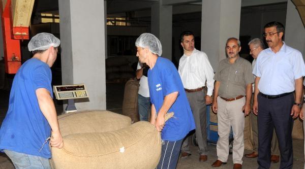 Fiskobirlik Başkanı Bayraktar: Hedef 10 Bin Ton Fındık Almak
