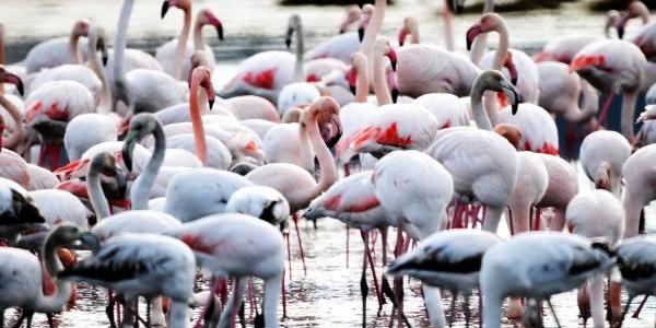 Flamingolar Bodrumda