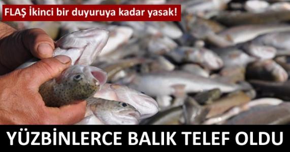 Flaş! İkinci bir duyuruya kadar yasak! Yüz binlerce balık telef oldu!