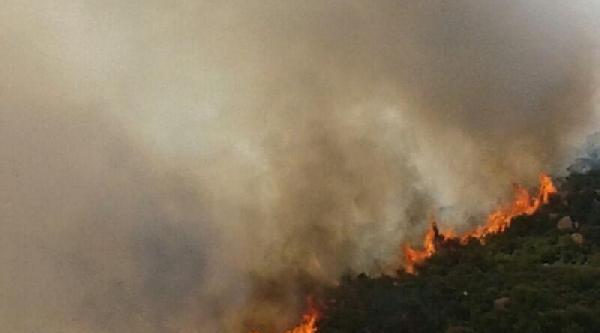Foça'da Orman Yangını (3)