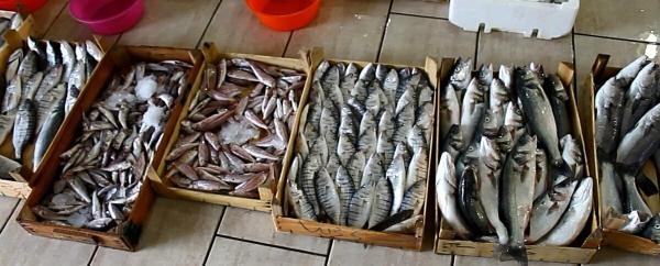 Foçalı Balıkçılar Sezonu Açtı