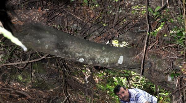 Fok Görülen Danaağzı, Tabiat Parkı İlan Edildi