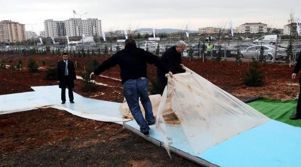 Fotoğraflar // Başbakan'in Toprak Ve Su Döktüğü Ladin Ağacina 'milli Iradeye Saygi' Adi Verildi