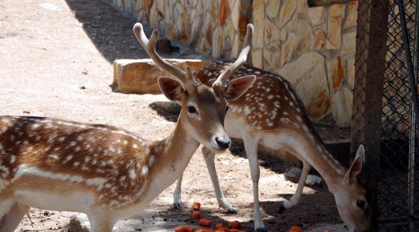 Gaziantep Hayvanat Bahçesi'nde Nüfus Artıyor
