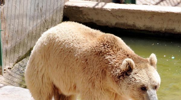 Gaziantep Hayvanat Bahçesi'nde 'sıcak' Ayarı