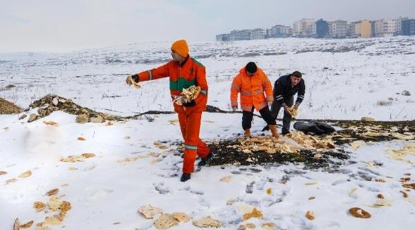 Gaziantep'te Hayvanlar Için Doğaya 10 Ton Ekmek Birakildi