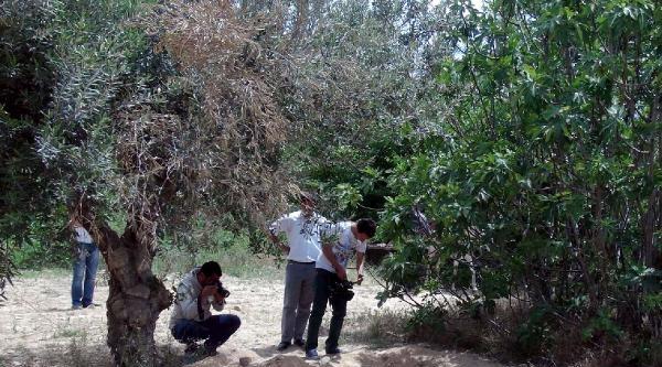 Gaziantep'te Toprağa Gömülü Kadın Cesedi Bulundu