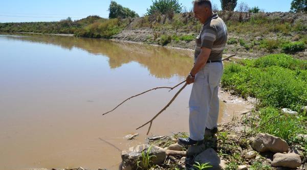 Gediz Nehri'nde Toplu Balık Ölümleri