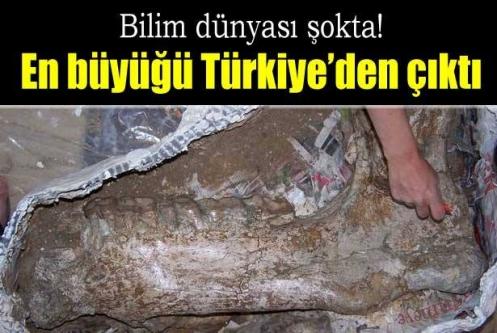 Gelmiş geçmiş en büyük fosil Türkiye'de çıktı!