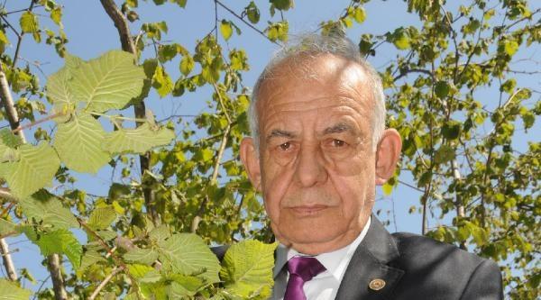 Giresun Ziraat Odası: Fındıkta Yüzde 70'in Üzerinde Zarar Var