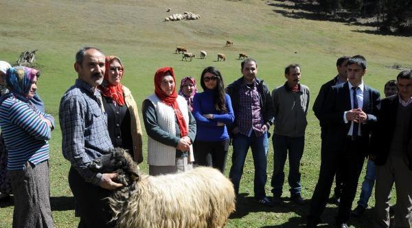 Giresun'da Çobanlik Kursu