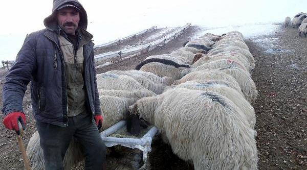 Göçerler, Koyunlari Için Su Ve Yem Bulamiyor