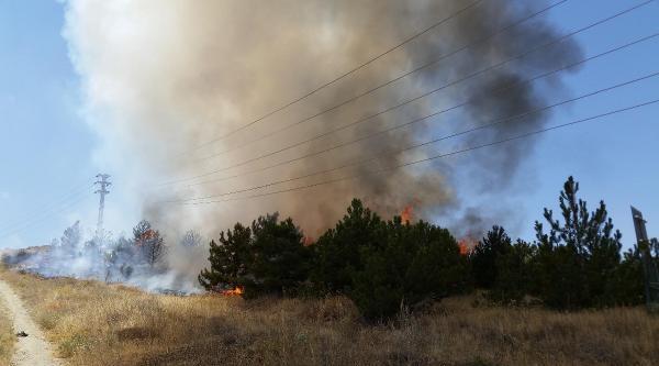 Gölbaşı'nda Orman Yangını