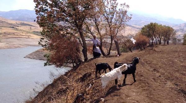 Gölet Kayısında Mahsur Kalan 8 Keçi Kurtarıldı