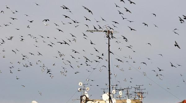 Güvercinlerin Güneşle Dansi